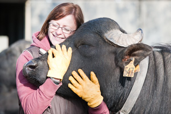 Lori Smith with one of her 200 charges at the Ontario Water Buffalo Company in Stirling.